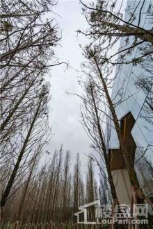 万科森林公园