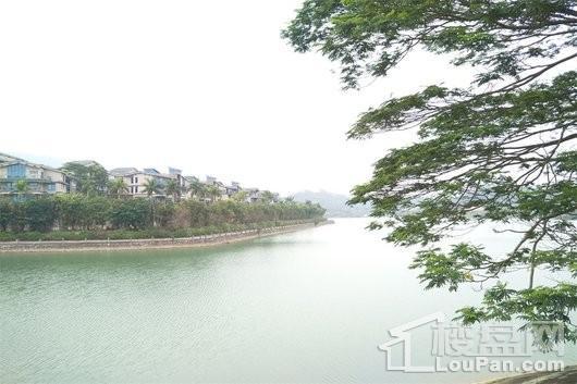 碧桂园森林湖配套图