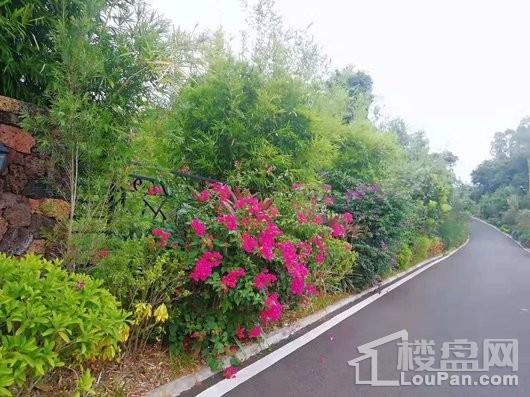 海南中基美域道路园林景观