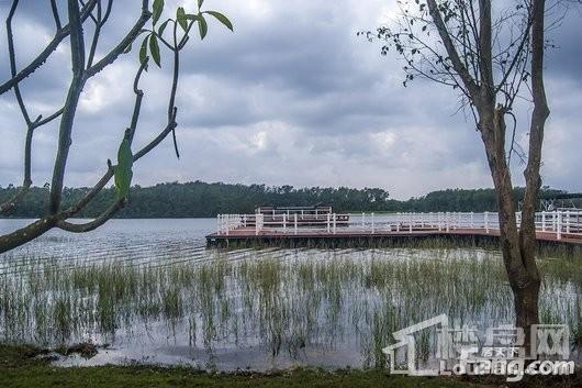 爱克·养生谷周边定安南丽湖湿地