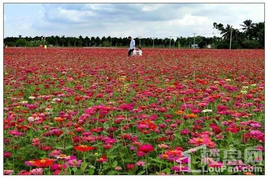 博鳌椰风海岸周边配套-龙寿洋花景