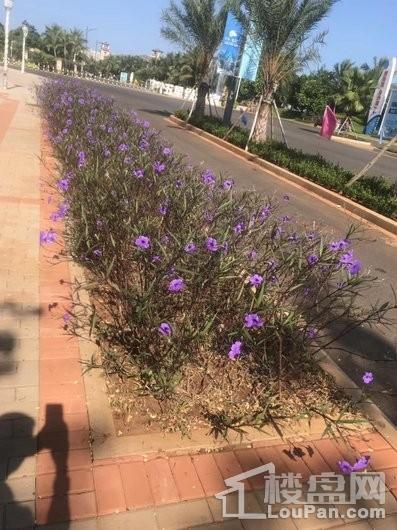 汇泽·蓝海湾小区绿化
