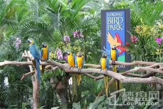 长信·半岛美庐周边 热带飞禽世界