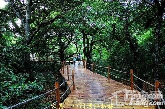 观澜湾周边 八门湾红树林