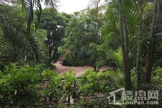 碧海别墅园林绿化