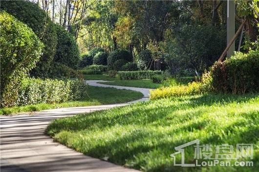 想象国际小区园林绿化实景拍摄