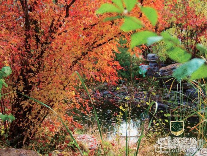 辰能溪树河谷