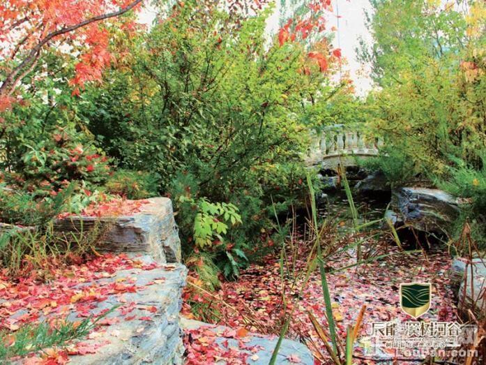 辰能溪树河谷实景图