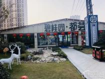 蚌埠碧桂园都荟附近道路升级改造