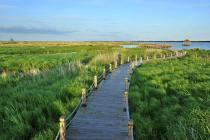 天津首个超大型国家湿地公园将在10月建成开放!