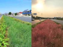 和平路西延精品绿化工程初具规模 周边楼盘受益