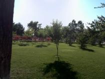 石家庄:体育公园等9座公园广场被确定为第一批永久性绿地