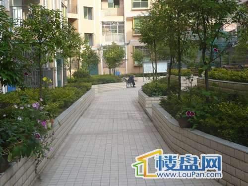 怡景新城 小区绿化带