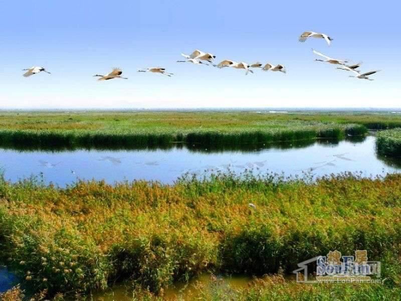 安居绿园项目向南约1公里的湿地