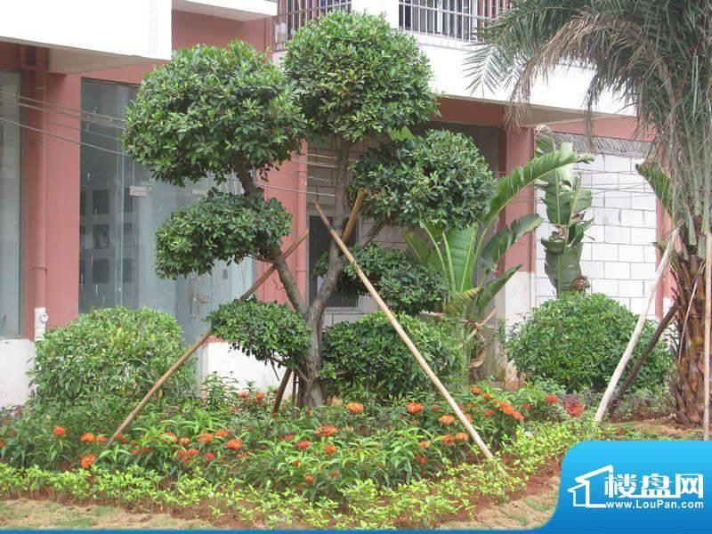 宝泰温泉花园园林实景(20111014)