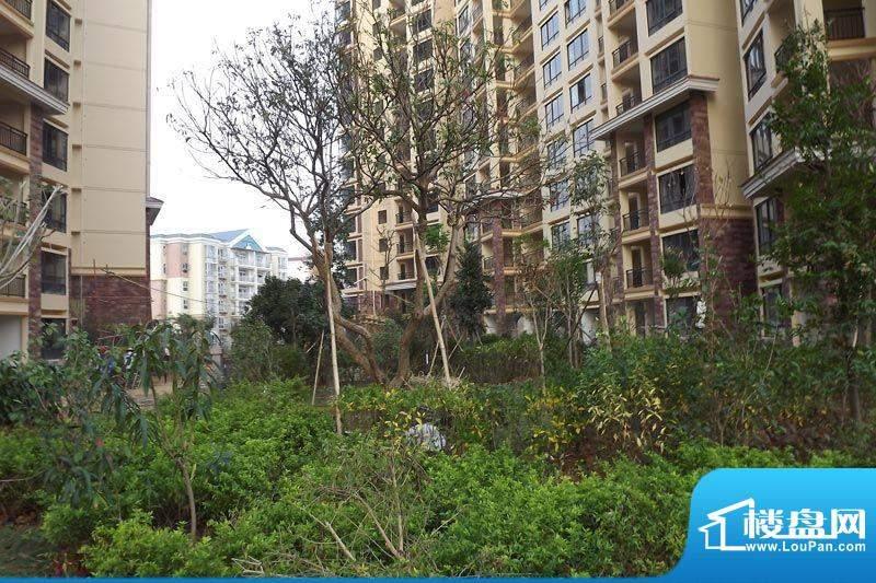 海枫和苑园林实景图20111122