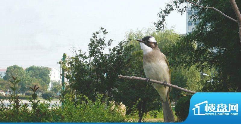 怡景花园小区自然生态环境(2011-9)