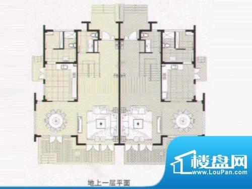 阳光花城双拼IF户型 地上一层 面积:317.00平米
