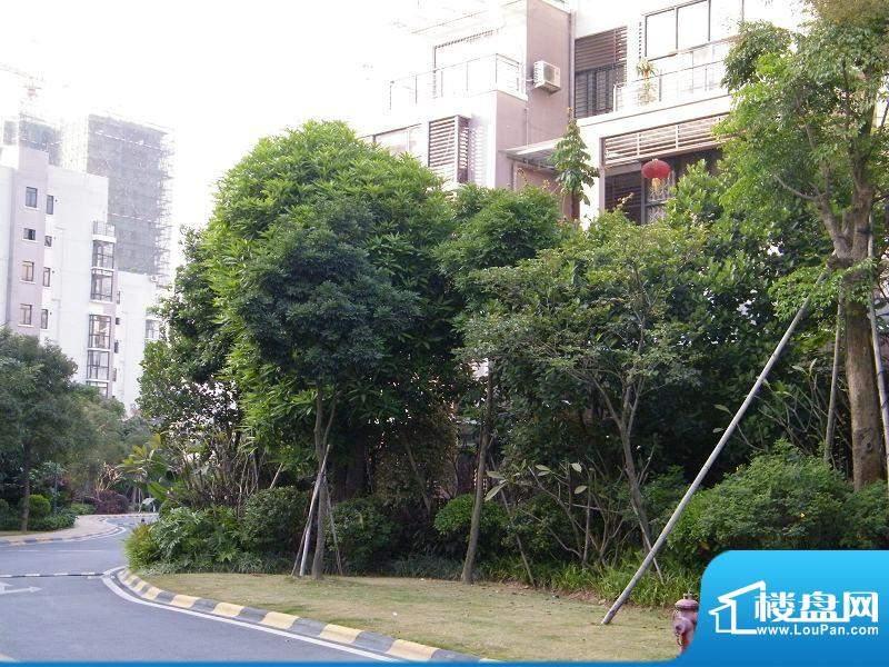 金域中央天睿小区园林实景(2010-12-02
