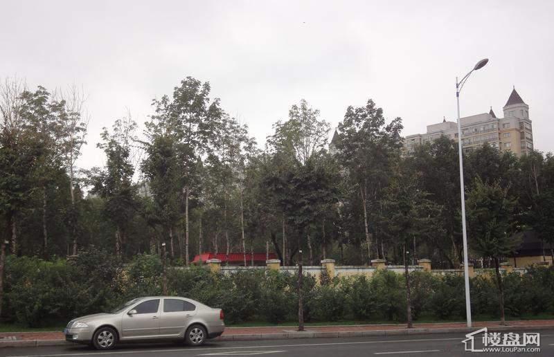天悦项目周边绿化实景图(2012-09-04)