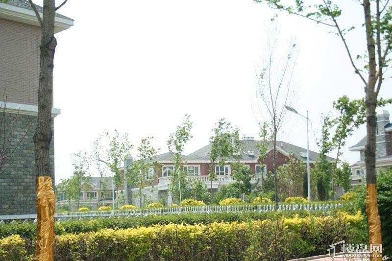 拙墅小区内部实景(2012-05-31)
