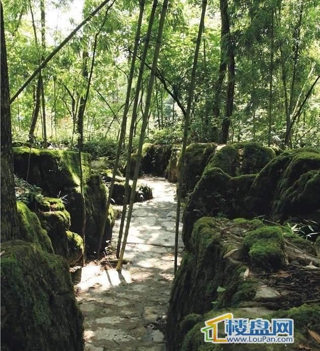 仙女山1号国际休闲度假区实景图