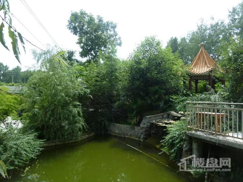 桃溪左岸实景图