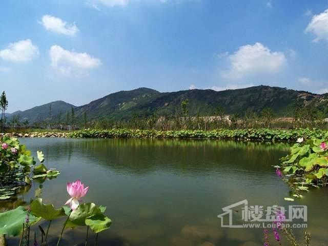 苏宁置业南湖大道项目实景图