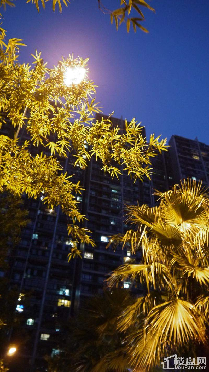 新长江香榭琴台二期夜景