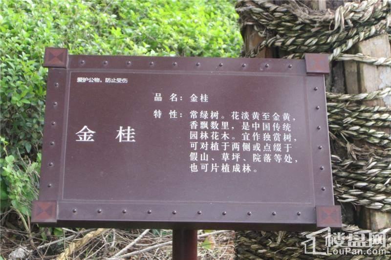 2013.11.14园林实景图