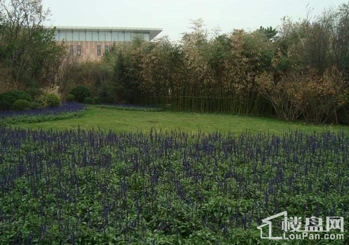 龙湖·时代天街实景图