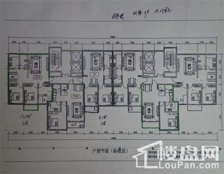 8号楼共两个单元,双梯三户