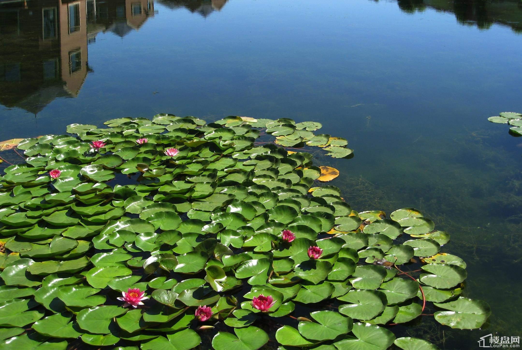 园区实景-水系