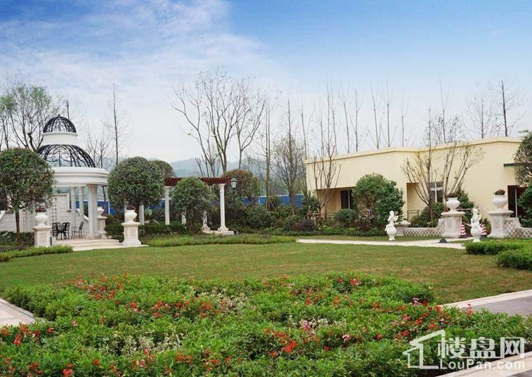 龙湾国际实景图