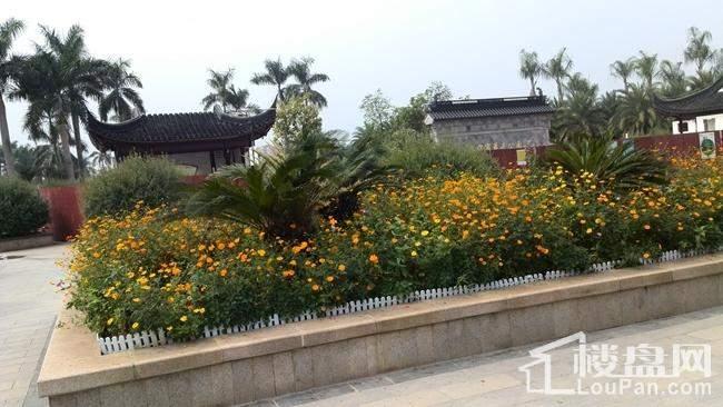 花卉公园内