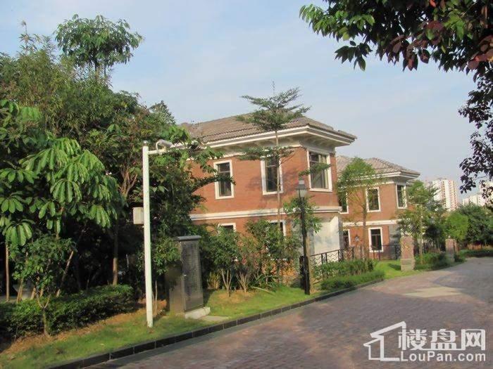 八桂绿城实景图