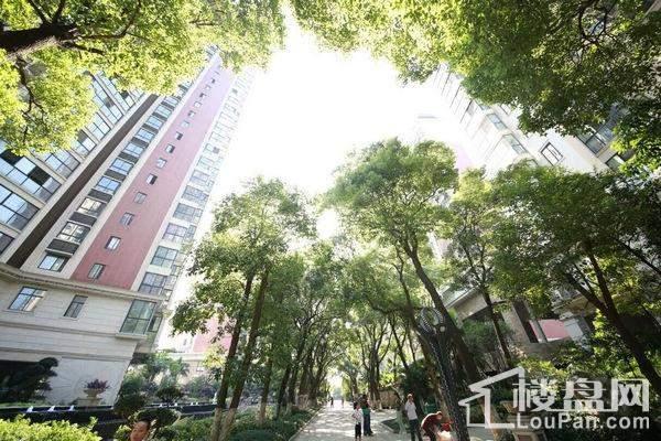 城市绿岛实景图