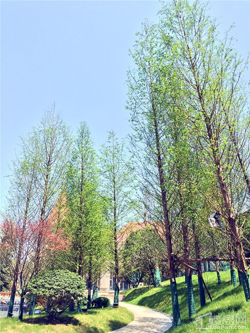郴州恒大帝景二期示范园林