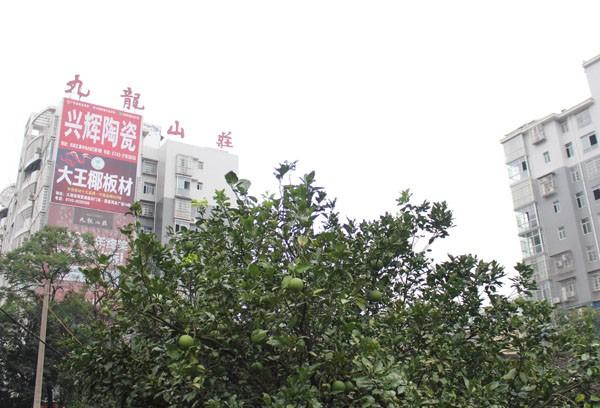 九龙山庄位置图