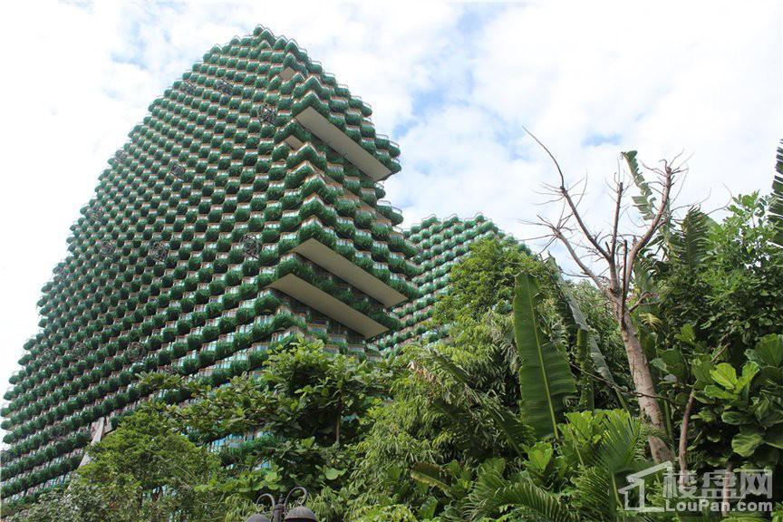 美丽之冠大树公馆实景图