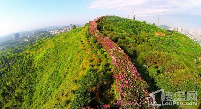 碧桂园·紫薇上城实景图