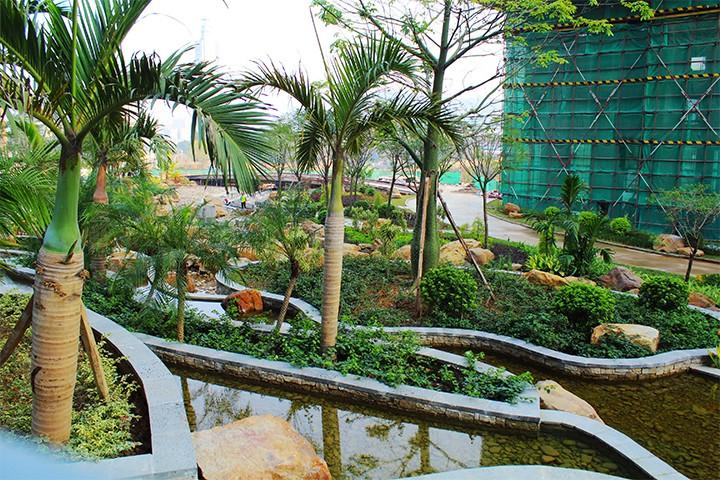 沙湖绿洲实景图