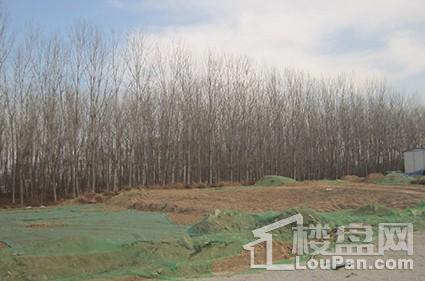 裕昌莲湖新城实景图