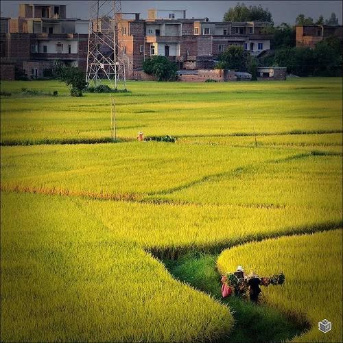 """""""城里人""""苏杨费尽周折做回""""农民"""",是在等这样一个机会......"""