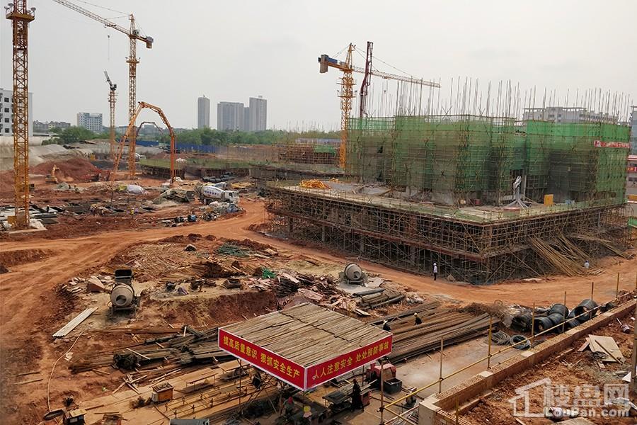 联发西棠春晓实景(摄于2018-4-2)