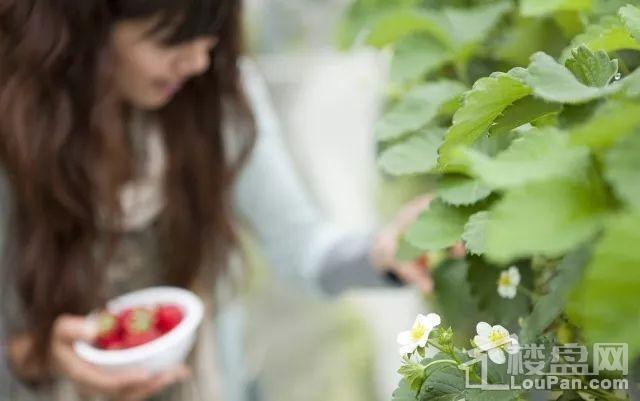 草莓节兰州万科城