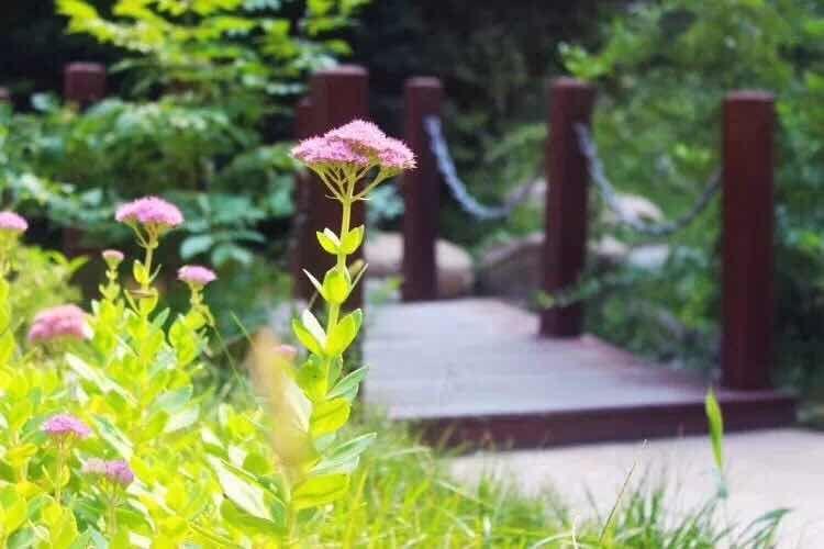 美林山 107㎡三室两厅一卫,带花院