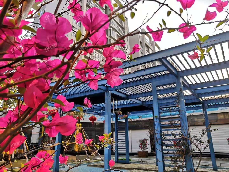北海百丰花园小区实景图