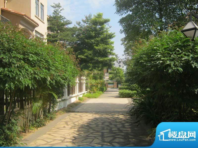 迪亚小城小区街道实景图(2010-11-18)