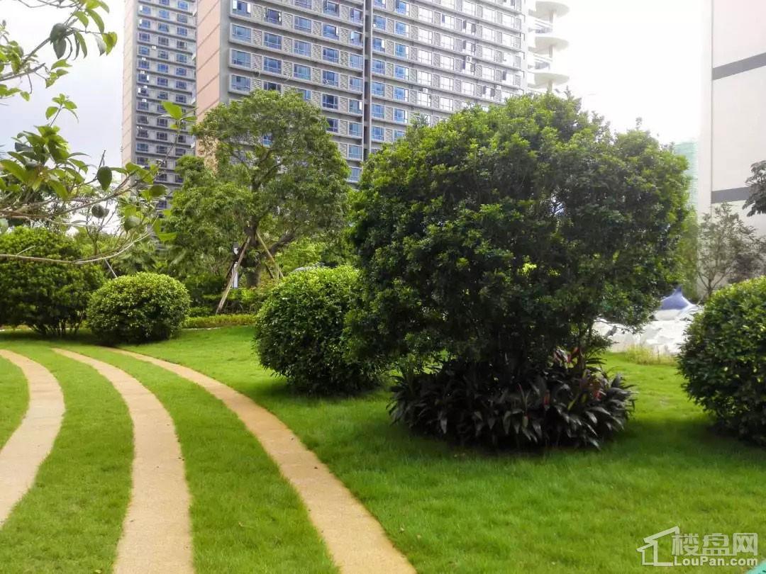 北海禧悦湾园林绿化实景图